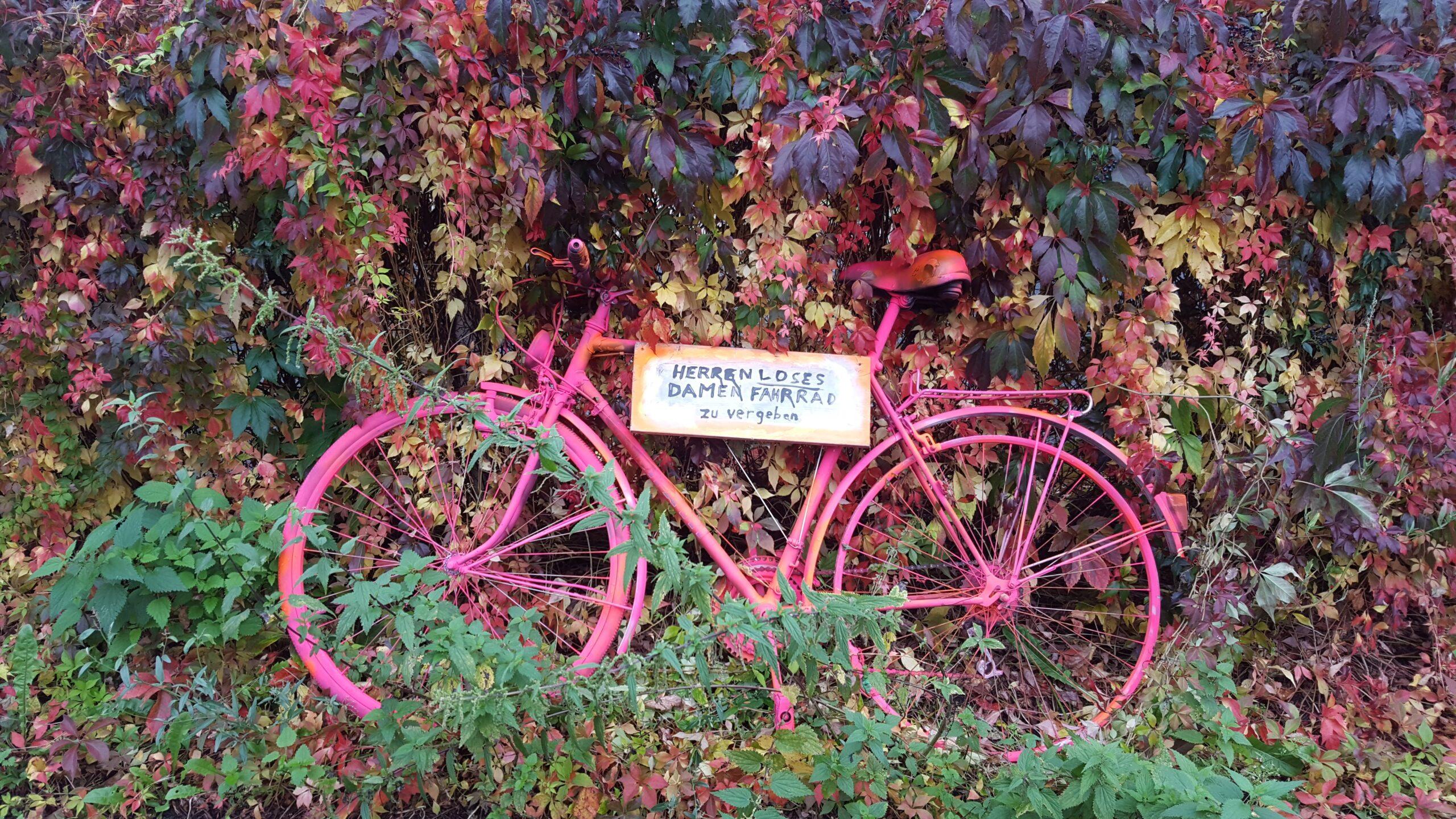 Herrenloses Fahrrad vor Herbstlaub